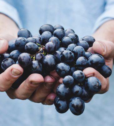 Wine Fluency #101